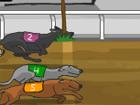 Köpek Yarışı 2